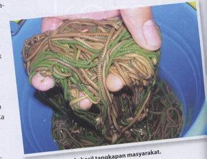 cacing nyale dari lombok tengah